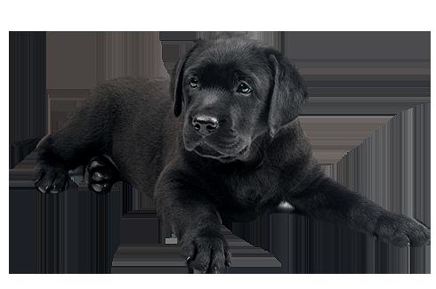 Dog Dogs Training Northern Michigan