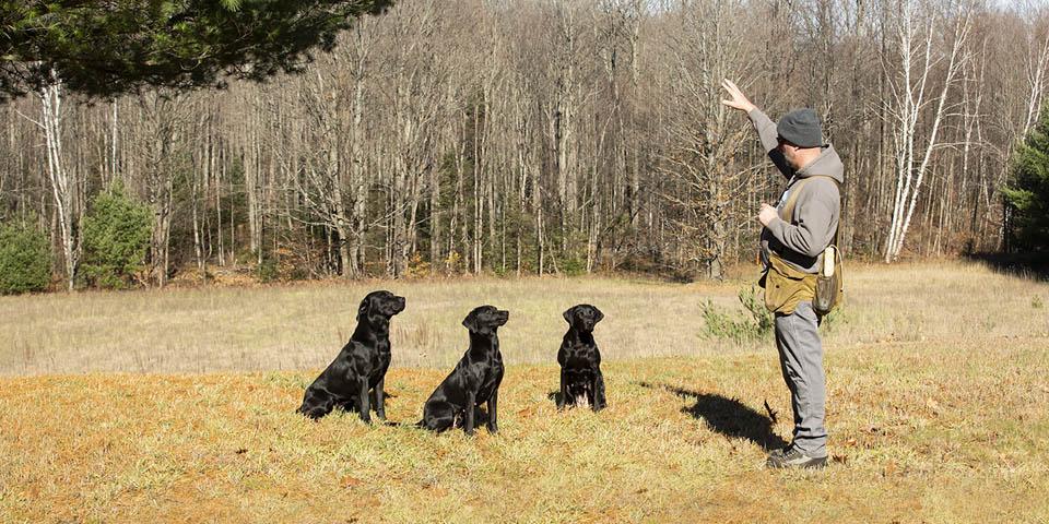 Songdog Kennels Socialization Period Dogs