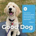 Bailey Dog Training Graduate Northern Michigan