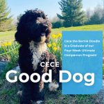 Cece Bernedoodle Dog Training Northern Michigan
