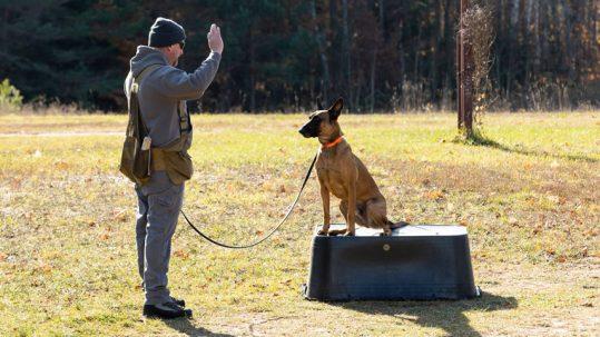 SongDog Ultimate Companion Dog Training Northern Michigan